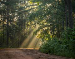 Morning Rays (Lane Rushing) Tags: road morning flowers sunlight nature sunrise nikon grandmother wildflowers sunrays d600 bigmomma 2470mmf28 thepinnaclehof storybookwinner storybookbtd1st harrellprariebotanicalarea tphofweek217