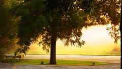 Walnut tree in the fog (1suncityboi) Tags: