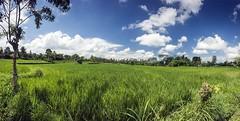 Impok_D130807T044220_ICT03084-03088 (Impok) Tags: indonesia banglibali