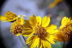 IMG_9655 (Mr.Lujan) Tags: flowers macro fall leaves rebel spider bugs ants upclose lujan canonxsi