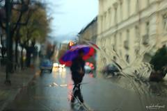 piove.. (Alessandro.Gallo) Tags: acqua inverno pioggia ombrello piove gocce pinerolo alexgallo