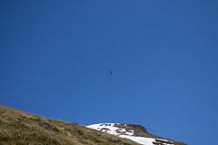 13042013-IMG_2253.jpg (johnny.farquet) Tags: animaux oiseaux gypatebarbu