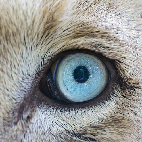The blue eye of Zumba