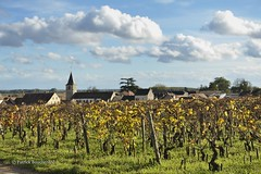 L'or de la Bourgogne / Gold Burgundy (patoche21) Tags: france landscape vineyard nikon scenery village 21 burgundy paysage bourgogne vignoble vigne 2470mm ctedor vosneromane d700 capturenx2 patrickbouchenard
