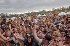 Field Crowd