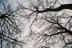 up (knautia) Tags: uk trees england film bristol nest january olympus ishootfilm xa2 200iso lookingup myfavouritefromtheroll agfa olympusxa2 2014 agfavista uew bowerashton vision:mountain=0627 vision:outdoor=0959 xa2roll134
