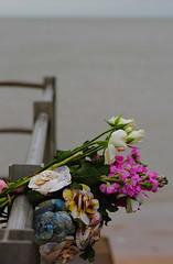 Loss (mussy5) Tags: uk flowers sea loss kent bokeh bouquet seafront railings gimpsoftware smusgrove2014