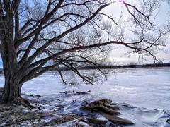 Winter-Tree