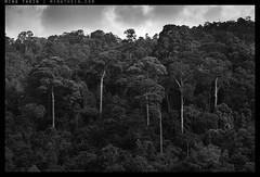 _8A00015bw copy (mingthein) Tags: trees blackandwhite bw monochrome zeiss t nikon bokeh availablelight apo carl ming sonnar 2135 onn 1352 thein zf2 photohorologer mingtheincom d800e