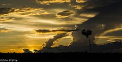 El Corazn de la Naturaleza. (FotosElGery) Tags: sunset sky sun tree sol animals clouds atardecer peace cows heart paz cielo nubes rbol animales majestic corazn vacas majestuoso