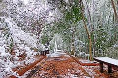 Promenade of Snow Day /  (Dakiny) Tags: japan 2014 2014 winter  february 2 kanagawa  kanagawaprefecture  yokohama  yokohamacity  aobaward  obacho  ancienttomb moundtomb tumulus  inarimaetombs  photograph  snap  snapshot  sony cybershot dscrx100 rx100 sonycybershotdscrx100 carlzeiss  {vision}:{plant}=0796 {vision}:{outdoor}=0971