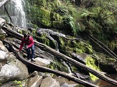 lorne 401 (raqib) Tags: holiday nature water trekking trek waterfall hiking victoria hike falls bushwalking vegetation rc lorne iphone erskine erskinefalls waterfallaustralia