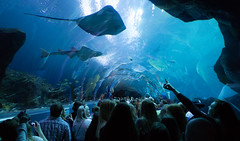 ATLANTA - GEORGIA (Rafael Storch) Tags: blue atlanta people fish water animal georgia aquarium jaws soe flickraward natureandpeopleinnature flickrtravelaward