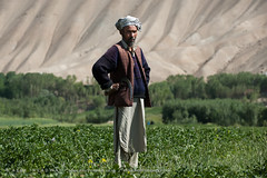 Bamiyan potatoes (Alex Treadway) Tags: afghanistan man tree nature field standing outdoors asia day fulllength growth leisure af agriculture adultsonly scenics oneperson freshness headdress bamiyan traditionalculture tranquilscene midadultman traditionalclothing fragility ruralscene onemanonly nonurbanscene bamiyanprovince middleeasternethnicity 5054years