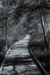 _MG_9498 (Antonio Balsera) Tags: bw espaa spain camino bn ciudadreal parquenacional castillalamancha daimiel lastablasdedaimiel