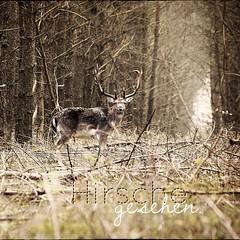 Frisch gebloggt:  Hirsche gesehen.  http://t.co/91esqjbfRR