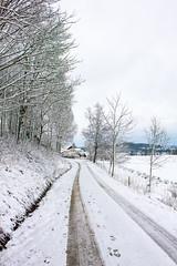 Winter #2 (a.carlsson) Tags: winter snow nature sweden uddevalla herrestad