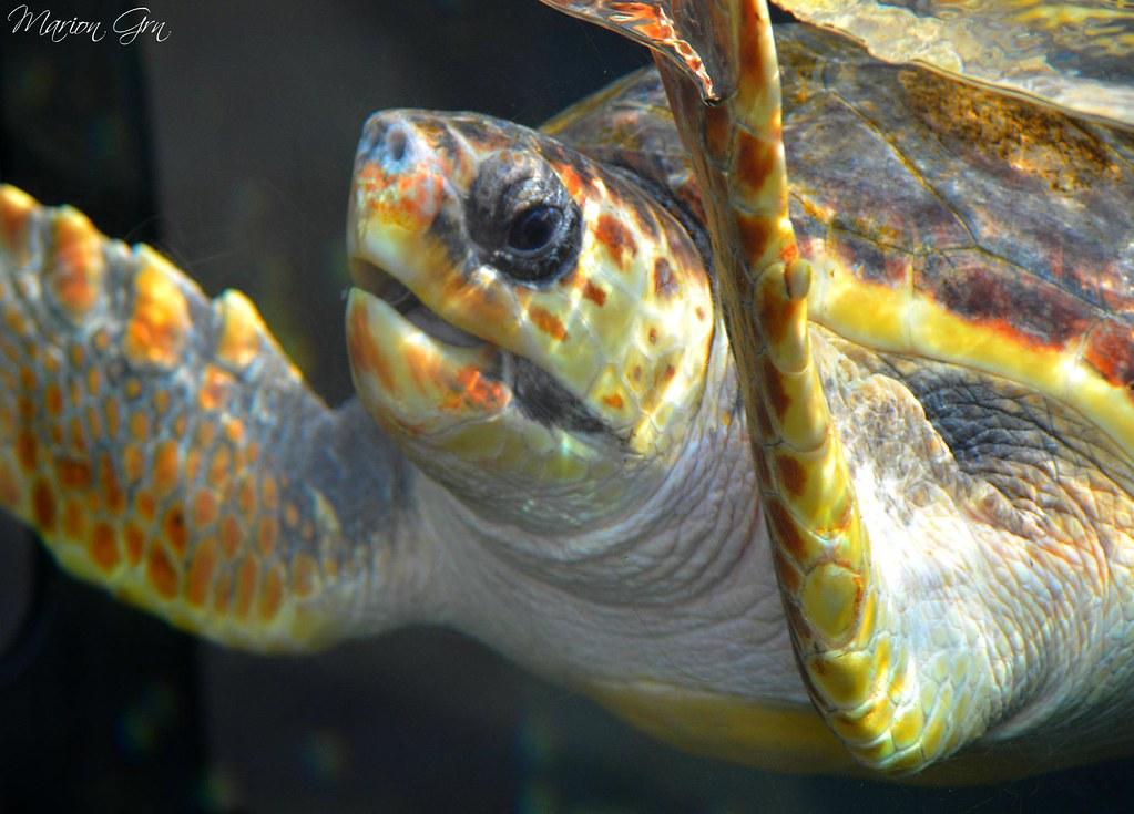 The world 39 s best photos of aquatique and marineland for Aquarium tortue aquatique