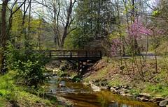 Spring Bridge (Cubsherpa2016) Tags: spring bridges streams redbuds nikond5100