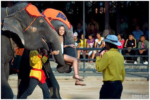 Представление слонов | Thailandå ñëîíîâ | Thailand
