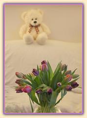 Teddy Bear Love & Tulips (bigbrowneyez) Tags: flowers stilllife ontario canada love nature beautiful fun furry soft tulips sweet bokeh ottawa blossoms adorable fluffy natura dolce teddybear dreamy bouquet fiori belli amore valentinesday delightful orso huggable bellissimi teddybearlovetulips