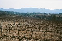 vineyard (davidgarciadorado) Tags: 35mmfilm olympus35sp lodakektar penedesspainvineyard