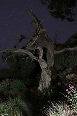 Cap Sici (gregoryjouval) Tags: stella tree night stars noche arbres rbol albero nuit arbre estrella etoile notte