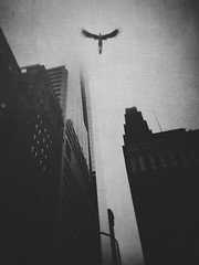 Make me a bird and I'll fly too (columnsovsleep) Tags: blackandwhite texture angel buildings dark moody surreal fantasy mysterious bnw iphone mobilephotography iphoneart iphoneography iphone6 columnsovsleep iphone6plus