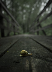 snail (dovlindphoto) Tags: snail bridge dof wood tree wideangle sweden dalsland ml dovlind dovlindphoto pentax k3