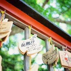 21770011 (redefined0307) Tags: travel film japan analog mediumformat kamakura slidefilm  fujichrome kanagawa     bronicas2 zenzabronica provia400x zenzabronicas2