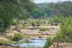Suedafrika-27 (Lukas P Schmidt) Tags: elephant nationalpark zebra krugerpark