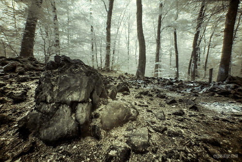 """Silent woods [Explore] • <a style=""""font-size:0.8em;"""" href=""""http://www.flickr.com/photos/29952986@N05/26772409474/"""" target=""""_blank"""">View on Flickr</a>"""