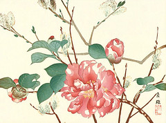 Camellia and willow (Japanese Flower and Bird Art) Tags: flower art japan print japanese willow camellia japonica woodblock nihonga salix theaceae salicaceae readercollection