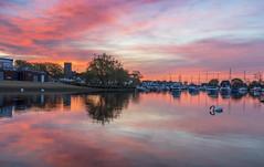 Christchurch Quay (nicklucas2) Tags: christchurch cloud reflection bird animal sunrise river landscape dawn swan quay stour