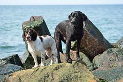Waterfront (Flemming Andersen) Tags: water seaside spring buddy zigzag