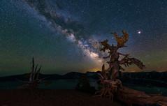 Twisted Tree (rajaramki) Tags: nightphotography craterlake milkyway
