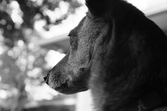 possum hunting (BPPrice) Tags: portrait dog heidi creativestylelandscape