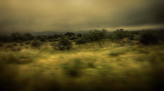 Ashes (flowerweaver) Tags: trees mountains green yellow dark landscape sadness grey sad dream overcast hills ethereal sultry depressed dreamy grasses depressing glum texashillcountry shotfromamovingvehicle naturalmotionblur