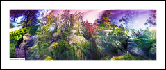 In the spring forest (DelioTO) Tags: city flowers ontario canada closeup garden landscape botanical spring colours may trails panoramic pinhole curved portra 6x17 natparks autaut f175