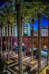 Palm Trees at Petco Park at Night - San Diego CA (mbell1975) Tags: california park ca trees usa field night america major us san unitedstates sandiego baseball stadium diego palm calif arena cal american league petco mlb majorleague