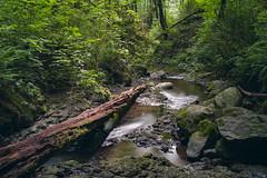 Oregon Jungle (Flat-Sax Jones) Tags: park green water oregon forest 35mm portland woods nikon stream long exposure d610