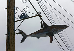 Signs (wolf4max) Tags: sign signs fish seafood novascotia canada signpost signposts shark