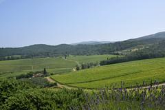 DSC_3850 (erinakirsch) Tags: italy castle landscape florence vineyard view wine vine winery vineyards views tuscany toscana grape grapevine florenceitaly frescobaldi winegrapes nipozzano
