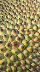 #jackfruit (shubha.1023) Tags: jackfruit