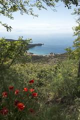 IsolaDelGiglio_20160602_0005 (Matteo Lanzoni) Tags: toscana papaveri isoladelgiglio arcipelago