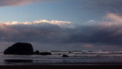 Sunrise at Bandon (San Francisco Gal) Tags: ocean morning sky cloud reflection beach water birds rock oregon sunrise surf pacific wave stack cormorant lowtide bandon coquillepoint