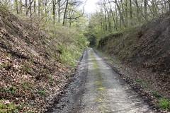 2016 Kunigundenweg/Durch diese hohle Gasse.. (*Tom68*) Tags: wood germany way bayern deutschland bavaria forrest outdoor franconia franken wald wandern pfad mittelfranken pilgerweg pilgern kunigundenweg