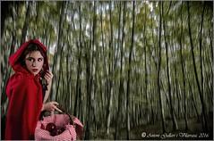 I si ve el llop?  La Garrotxa. (Girona-Catalunya) (Antoni Gallart i Vilarrasa) Tags: forest lumix model nikon catalonia girona modelo littleredridinghood bosque catalunya scanning miriam catalua gerona roja garrotxa bosc caperucita barrido vermella escombrat caputxeta
