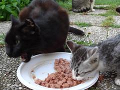 05062016N11 (starezubre) Tags: gatti giardino 2016 gattini mamme giocchi