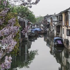 DSC00708 (Fibi's) Tags: china suzhou shanghai april hangzhou jiangnan 2016 trungquoc thuonghai tochau tuannguyen hangchau giangnam fibiphoto nguyenngoctuan fibitravel thang04
